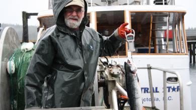 Atlantic salmon caught in Broughton Archipelage