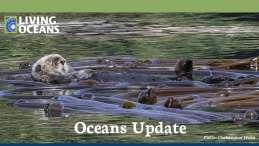 Oceans Update Summer 2021